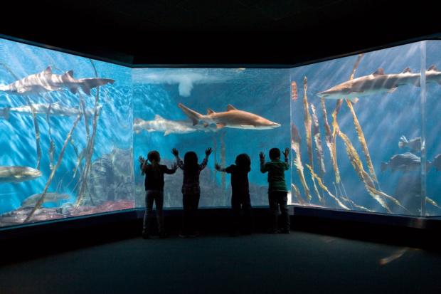 178_1maritime_aquarium_shark_tank